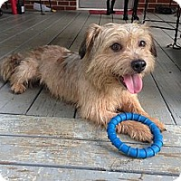 Adopt A Pet :: Ted - Hagerstown, MD