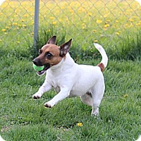 Adopt A Pet :: Marley Mae - Mt Gretna, PA