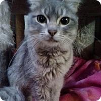 Adopt A Pet :: Hope - Modesto, CA