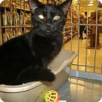 Adopt A Pet :: Laverne - Jackson, NJ