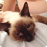 Adopt A Pet :: Mynka - North Highlands, CA