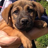 Adopt A Pet :: Fletch (10 lb) New Pics! - SUSSEX, NJ