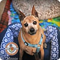 Miniature Pinscher Dog for adoption in Oceanside, California - Minnie