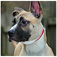 Adopt A Pet :: Cala - Forked River, NJ