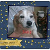 Adopt A Pet :: JAKE - Ventnor City, NJ