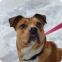 Adopt A Pet :: Nick - East Smithfield, PA