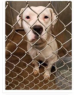Labrador Retriever/Terrier (Unknown Type, Medium) Mix Dog for adoption in Zanesville, Ohio - Nyati - ADOPTED!