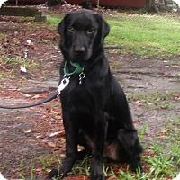 Adopt A Pet :: Coal - Murrells Inlet, SC