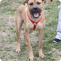 Adopt A Pet :: Chase - Staunton, VA