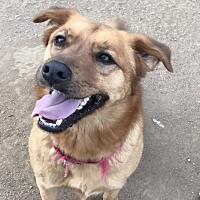 Adopt A Pet :: Scooby - Long Beach, CA