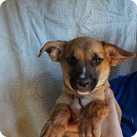 Adopt A Pet :: Bam - Oviedo, FL
