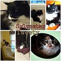 Adopt A Pet :: Sylvester - Hazel Park, MI