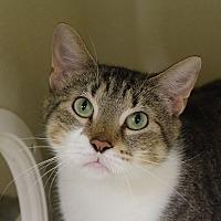 Adopt A Pet :: Genna - Chicago, IL