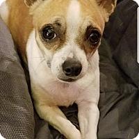 Adopt A Pet :: Dutchess - Houston, TX