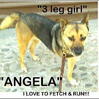 Adopt A Pet :: Angela -I'm 3 legged:) - El Cajon, CA