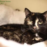 Adopt A Pet :: M.J. - Boone, NC