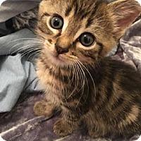 Adopt A Pet :: Yahtzee - Maryville, TN