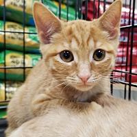 Adopt A Pet :: Velma - Toast, NC