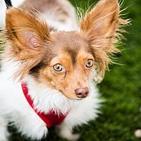 Adopt A Pet :: Peanut - Fallbrook, CA