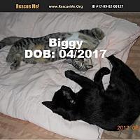 Adopt A Pet :: Biggy - Chandler, AZ