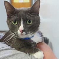 Adopt A Pet :: Gimli - Indiana, PA