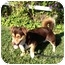 Photo 1 - Corgi Mix Dog for adoption in El Cajon, California - Alvin