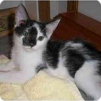Adopt A Pet :: Soot - Richmond, VA