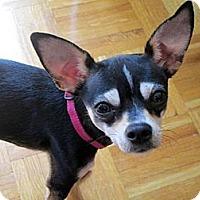 Adopt A Pet :: Lexus - Toronto, ON
