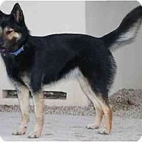 Adopt A Pet :: Nutmeg - Gilbert, AZ