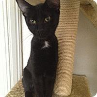 Adopt A Pet :: prince - Orillia, ON