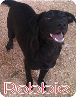 Labrador Retriever Mix Dog for adoption in Union City, Tennessee - Robbie