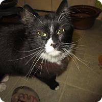 Adopt A Pet :: Grumbles - Coos Bay, OR
