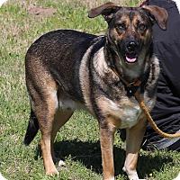 Adopt A Pet :: Charlie - Pluckemin, NJ