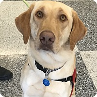 Adopt A Pet :: Lucy - Parsippany, NJ
