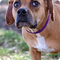 Adopt A Pet :: Moira - Gainesville, FL