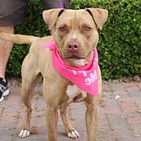 Adopt A Pet :: BERKLEY - Las Vegas, NV