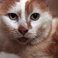 Adopt A Pet :: McMurphy - St. Louis, MO