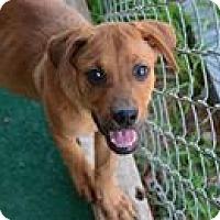 Adopt A Pet :: Tillie - Athens, AL