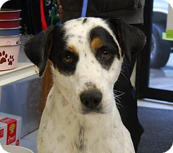 Bluetick Coonhound Mix Dog for adoption in Brooklyn, New York - Courage