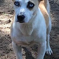 Adopt A Pet :: Minnie - Boston, MA