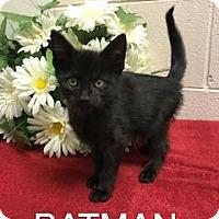 Adopt A Pet :: Batman - Salem, WV
