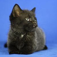 Adopt A Pet :: Gavin - Winston-Salem, NC