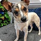 Adopt A Pet :: Rex - NO LONGER ACCEPTING APPLICATIONS!!