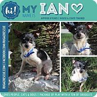 Adopt A Pet :: Ian - New Port Richey, FL