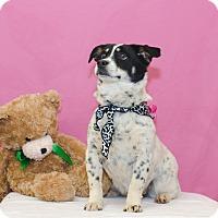 Adopt A Pet :: BRIDGET - Poteau, OK