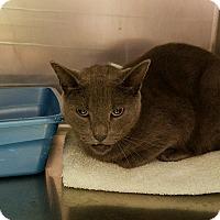 Adopt A Pet :: Chase - Goshen, NY