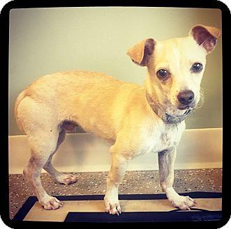 Chihuahua Mix Dog for adoption in Grand Bay, Alabama - Pedro
