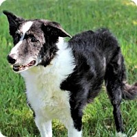 Adopt A Pet :: TRINITY - Sussex, NJ