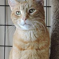 Adopt A Pet :: Sonny - Massapequa, NY