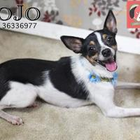 Adopt A Pet :: JoJo - Gulfport, MS